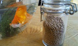 金魚のえさ