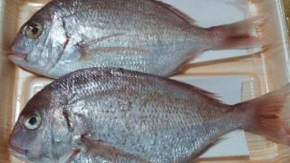 【魚】魚には水銀が含まれるから食べない方が良いは間違い?